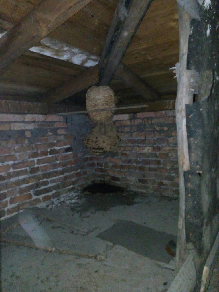 Гнездо ос на чердаке дома перед обработкой.