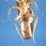 Как быстро размножаются тараканы.